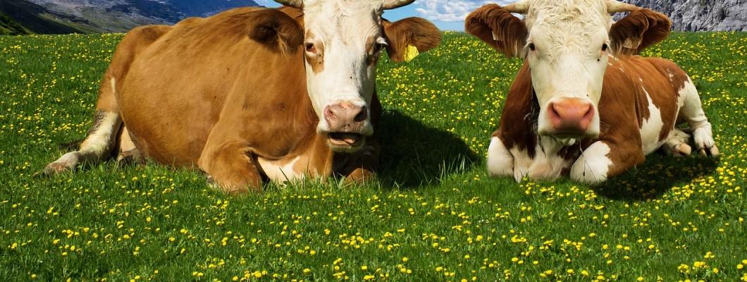 Българското кисело мляко - патент за здраве и дълголетие.